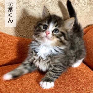子猫のオーナー様募集中