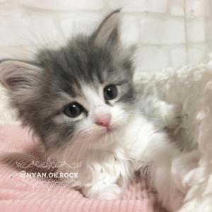 10月3日生まれの子猫