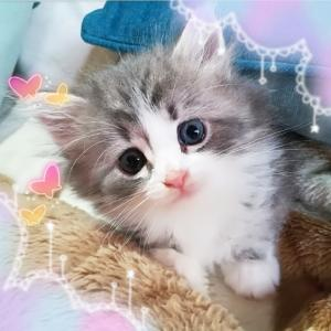 5月生まれの子猫たち