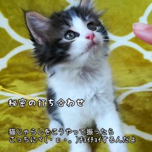 猫の写真撮影