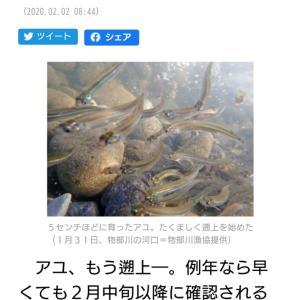各地の川では暖冬の影響からか稚鮎が遡上開始