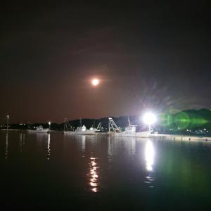 本マグロの貴重部位を西浦漁港の朝市で発見