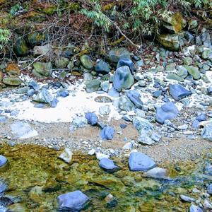 渓流釣り解禁前のアマゴ放流と川の状況