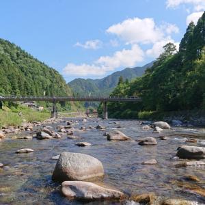 鮎釣り仲間から板取川上流での釣果報告が、