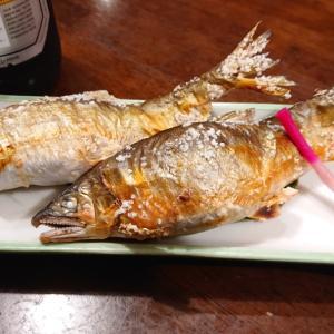 板取川上流のデカ鮎を塩焼きで頂く