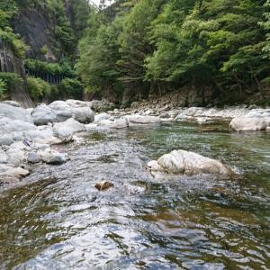 馬瀬川上流お盆頃の鮎の成長を昨年と比較