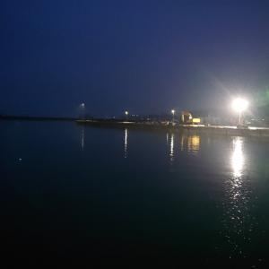 久しぶりに西浦漁港の朝市へ
