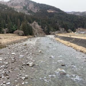 馬瀬川上流では渓流釣り解禁前のアマゴ成魚放流を実施