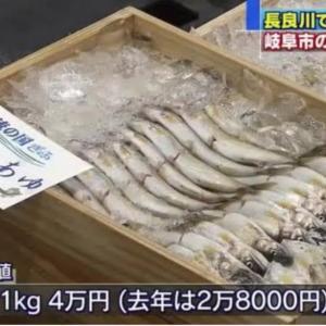 一部で鮎漁が解禁した岐阜県長良川の若鮎が初競りに、