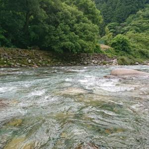 板取川上流では釣りたて若鮎を塩焼きで頂く、