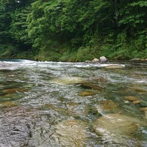 板取川上流の鮎釣りでは連泊した旅館で鮎づくし