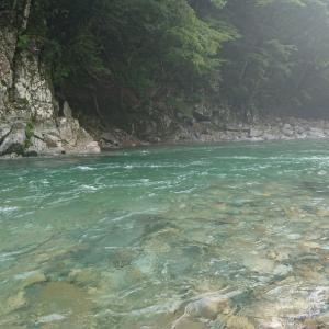 馬瀬川上流増水後は鮎の活性が上がった感じ、