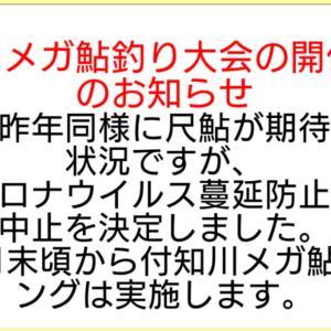 付知川のメガ鮎ランキングが前期,後期の2回に、
