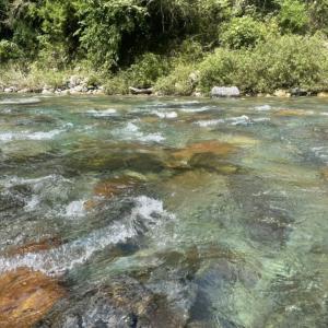 鮎釣り仲間から板取川上流の釣果報告が、