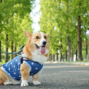 鶴見緑地でお散歩したょ