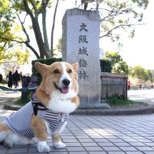 大阪城公園梅林へ