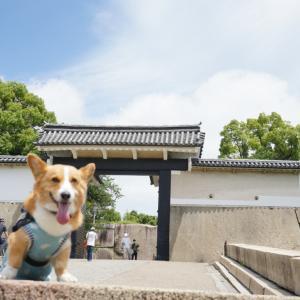 お散歩は大阪城公園