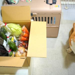 野菜のサイズ