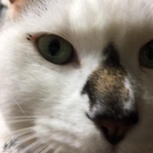 ゆく猫くる猫2017
