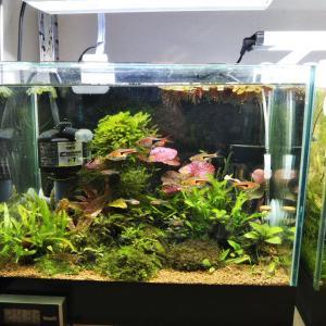 25センチ水槽水草追加(タイガーロタスレッド、ラゲナンドラとか)