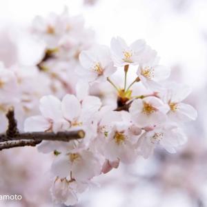 【おさらい会レポ】小金井公園・江戸たてもの園