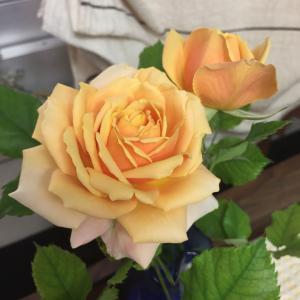 ◯ お隣りさんからバラをいただきました♡うさとの服もついに通販開始!されるそうですよ