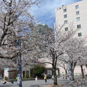 染井吉野桜記念公園:よく目にする普通の桜物語
