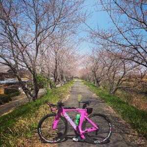長良川チャリ
