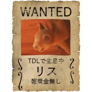 東京ディズニーランドでリスを探せ?