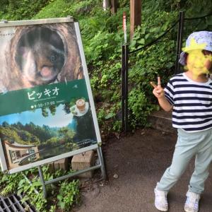★1歳&5歳  子連れ軽井沢旅行④ ピッキオで「たんけん!はじめての森」★