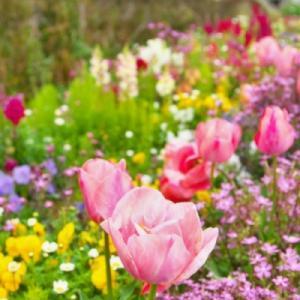 心に花を咲かせよう!