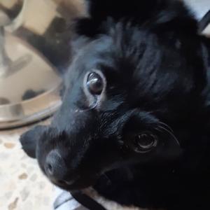 我が家に子犬がやってきました!!!