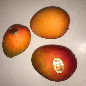 夏の楽しみもうひとつ やっぱりマンゴー!