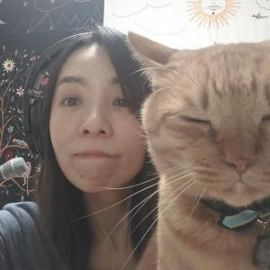 猫の顔がひとつも変わらない