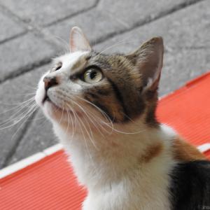 猫が見守る火鍋食堂 〜 @中国重慶 〜