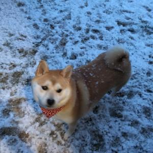 ももちゃんと雪