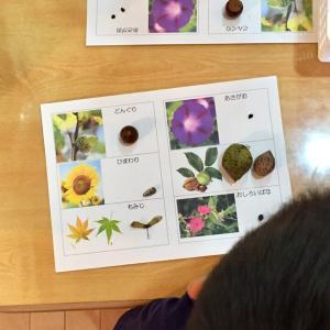 【報告】ダ・ビンチサイエンスかしの木教室「秋の木の実や落ち葉であそぼう」
