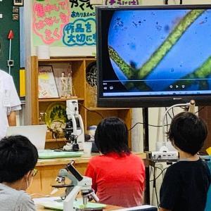 顕微鏡で見るプランクトンの世界!