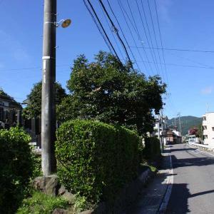 長野県岡谷市街 2019秋(28)