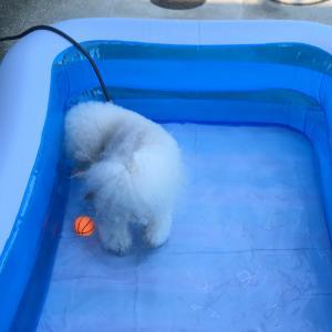 初めてプール遊びしたよ〜