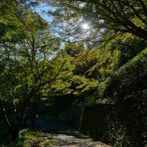 東海道を歩いて京都にゴールイン! (2019.11.16)
