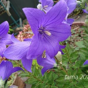 お星様の花とネジネジの花