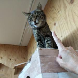 猫慣れ、その1.
