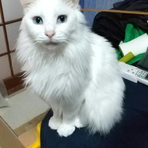 ユキちゃんの写真