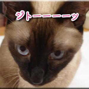 ジト目の猫たち