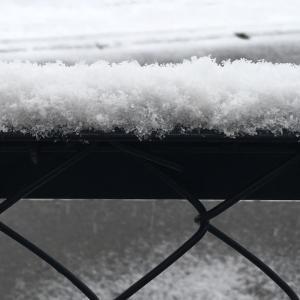 建国記念の日の雪