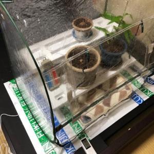 室内に簡易温室を設置しました!
