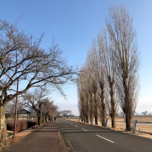 冬空の裸樹木