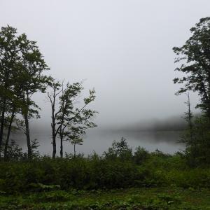 9月シルバーウィークのヒメオオ(1/2) 今年はいつも雨雲の中