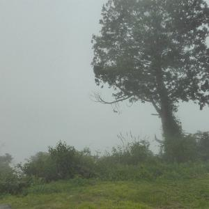 9月中のヒメオオ ここはいつも雲の中(´・ω・`) (3/3回)
